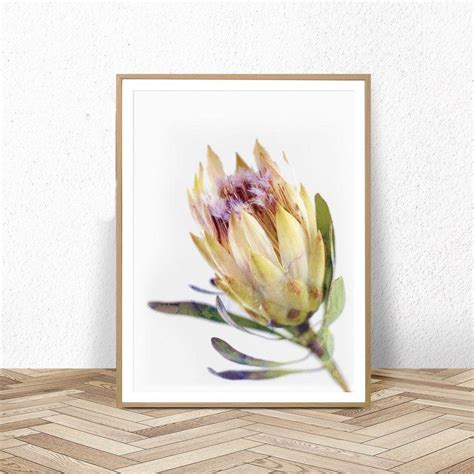 australian flower posters  prints protea wall art
