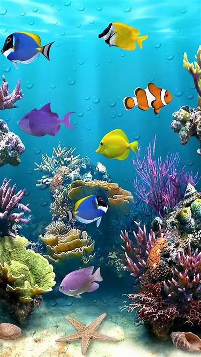 Fish Tropical Underwater Sea Iphone Aquarium Wallpapers