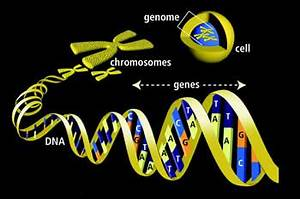 Difference between Gene and Genome | Gene vs Genome