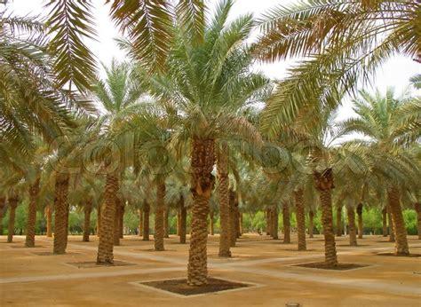 palm garden in the riyadh city saudi arabia stock photo