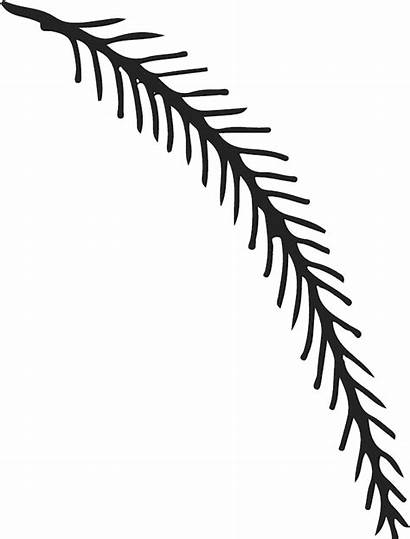 Clipart Fern Branch Pine Stamp Rubber Pinclipart