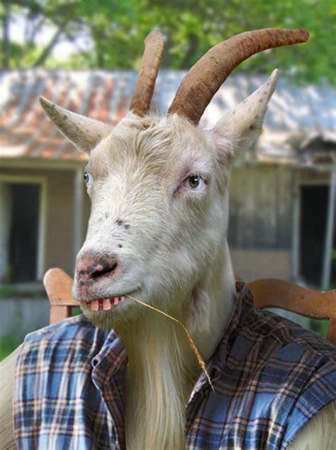 Billy Goat Meme - billy goat meme 28 images time to come home billy goat meme generator goat imgflip stoner
