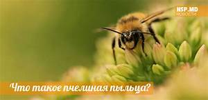 Пыльца пчелиная от диабета