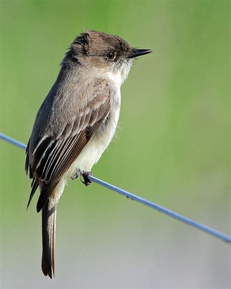 10 images about birds north carolina on pinterest
