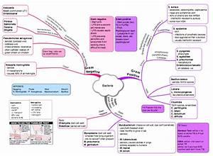 Bacteria Mind Map 1 Staph Aureus G Kløverbladmetoden