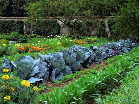 7 Secrets To Have A Continuously Productive Vegetable