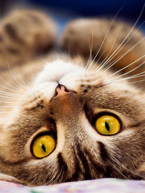 gambar anak kucing lucu imut terlengkap display picture