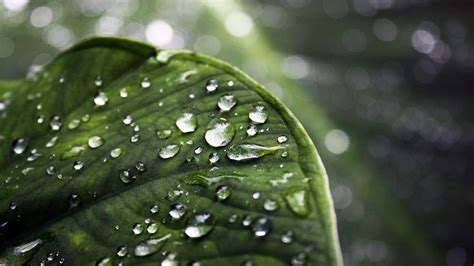 nature, Leaves, Water Drops Wallpapers HD / Desktop and ...