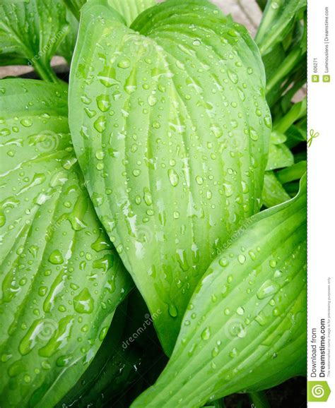 Tropical Leaves With Rain Stock Image Image Of Plant