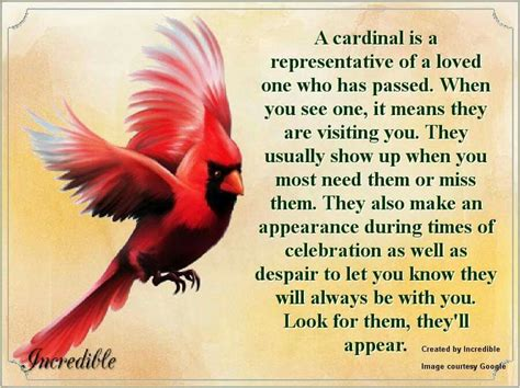 the meaning of a cardinal showing up 176 176 the