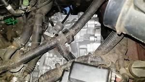 2009 Nissan Murano Oxygen Sensor Location  Nissan  Wiring