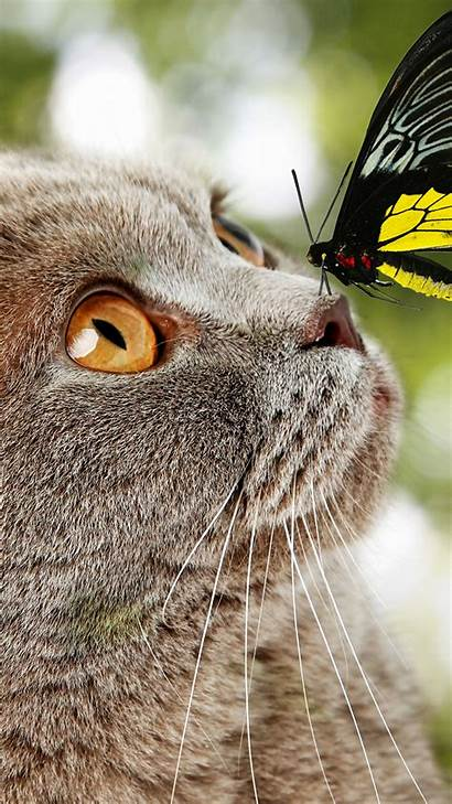 Cat Butterfly Nose Animal Mobile Cats Sitting