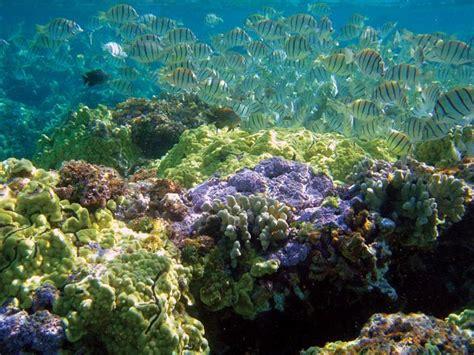 kure atoll marine islands hawaiian kelp northwestern wildlife refuge national boatus forests boat below monument state roundup weekly fackler noaa