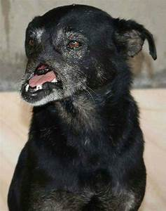 Dog Without A Snout Finally Finds A Loving Family Who ...