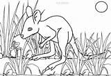 Kangaroo Coloring Pages Baby Drawing Printable Cool2bkids Getdrawings sketch template