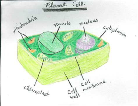 parts of a cell worksheet 5th grade worksheets for all