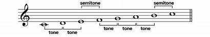 Diatonic Scales Semitones Tones Major Half Whole