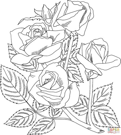 arizona grandiflora rose coloring page  printable