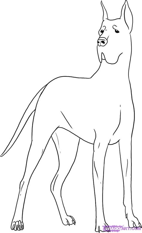 How To Draw A Great Dane, Step By Step, Pets, Animals