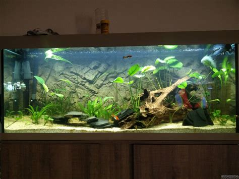 eheim vivaline 240 led eheim vivaline led 240 flowgrow aquascape aquarien datenbank