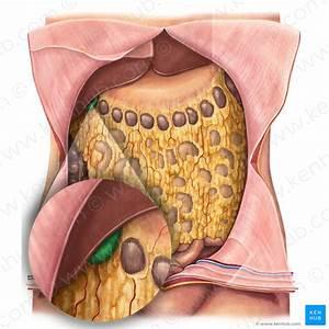 Ligament Of Treitz  Suspensory Ligament Of Duodenum