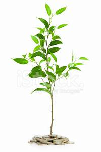 Very Young Tree Isolated With Pounds Stock Photos
