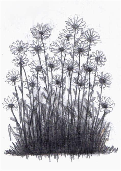 drawn daisy realistic pencil   color drawn daisy