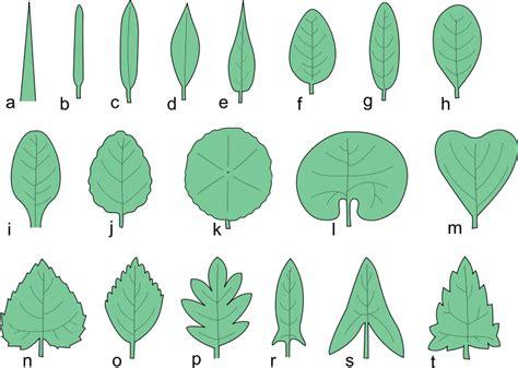 fileksztalty lisci bsvg wikimedia commons