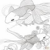 Coloring Fish Adult Golden Animals Betta Printable Ryby Coloriage Kolorowanki Adults Ausmalbilder Rossi Goldfisch Supercoloring Super Poisson Pokoloruj Colorir Ausmalbild sketch template