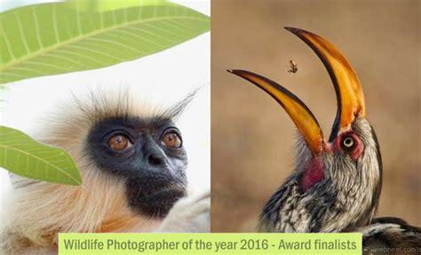 wildlife photographer   year  award finalists