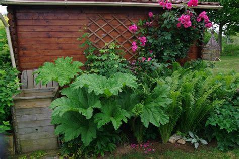plante d ombre exterieur vivace plantes 224 l ombre et en terrain humide pratique fr