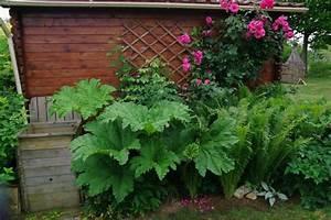plante depolluante pour la maison maison design bahbecom With modele de rocaille de jardin 17 fleurs de bordure liste ooreka