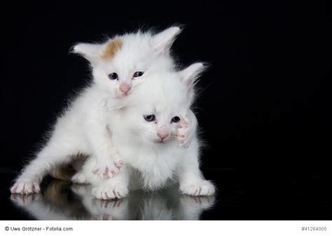 katzen kaufen  sollte man beachten
