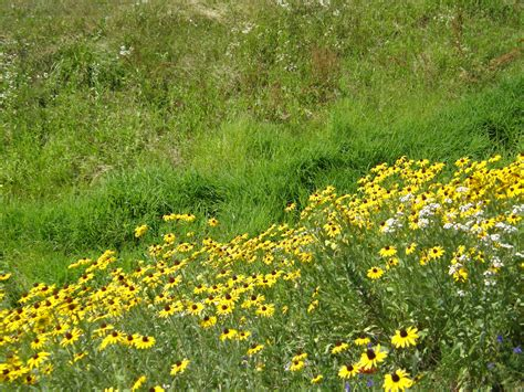 pennsylvania wildflowers chester county solid waste authority pa wildflowers