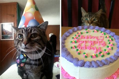 cat birthday birthday cat pictures www pixshark com images galleries with a bite