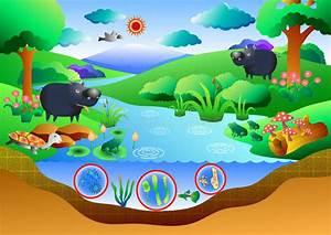Ecosystem Diagram Stock Vector  Illustration Of Ground