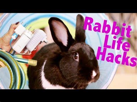 Rabbit Life Hacks Youtube