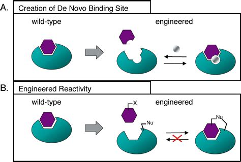 Engineering Selectivity and Discrimination into Ligand ...