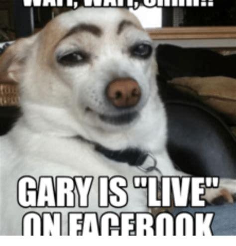 Gary Meme - 25 best memes about facebook live meme facebook live memes