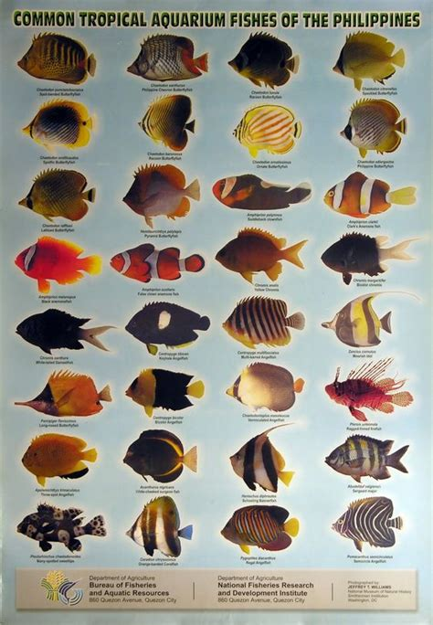 types  fish aquarium  common tropical aquarium fish