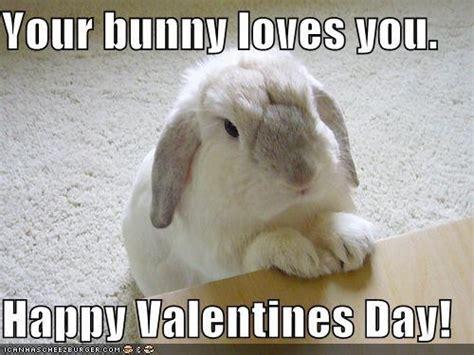 Bunny Meme - rabbit ramblings happy valentine s day