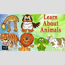 Learn About Animals  Animal Sounds  Learning Animals For Toddlers  Zoo Animals Youtube