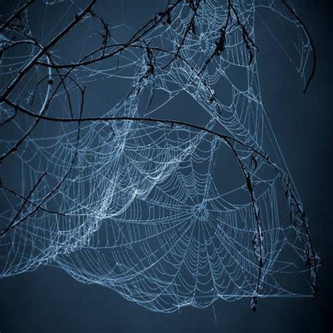 spider webs images  pinterest spider webs