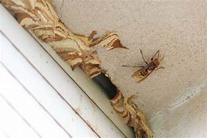 Mittel Gegen Wespen Im Rolladenkasten : hornissen im rolladenkasten was tun bei einem hornissennest im haus ~ Frokenaadalensverden.com Haus und Dekorationen