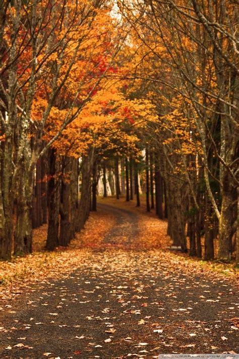 Android Hd Autumn Wallpapers by Ideas About Fall Wallpaper On Wallpapers Iphone
