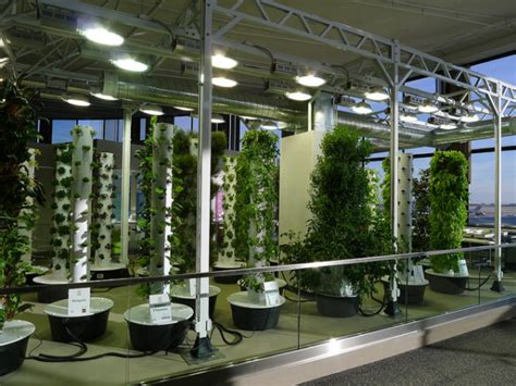 O'hare Airport's Vertical Aeroponic Garden Takes Flight