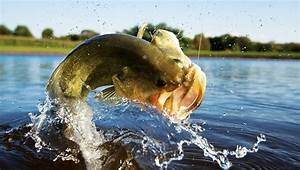 Bass Fishing Wallpapers For Android