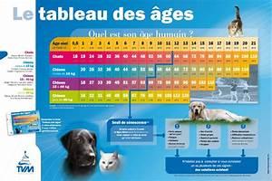 Quel Matelas Pour Quel Poids : poppy le plus vieux chat au monde est d c d l 39 ge de sciences et avenir ~ Mglfilm.com Idées de Décoration