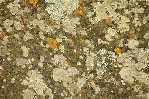 Schimmel Tapete Entfernen : schimmel an der tapete entfernen so beseitigt man den ~ Lizthompson.info Haus und Dekorationen