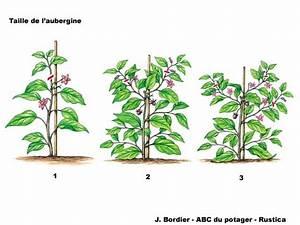 Quand Semer Les Tomates : la taille de l 39 aubergine au potager potager pinterest ~ Melissatoandfro.com Idées de Décoration